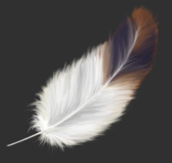 Peindre une plume trouvez le tutoriel photoshop cs4 cs5 flash illustrator et the gimp dont - Laver oreiller en plume ...